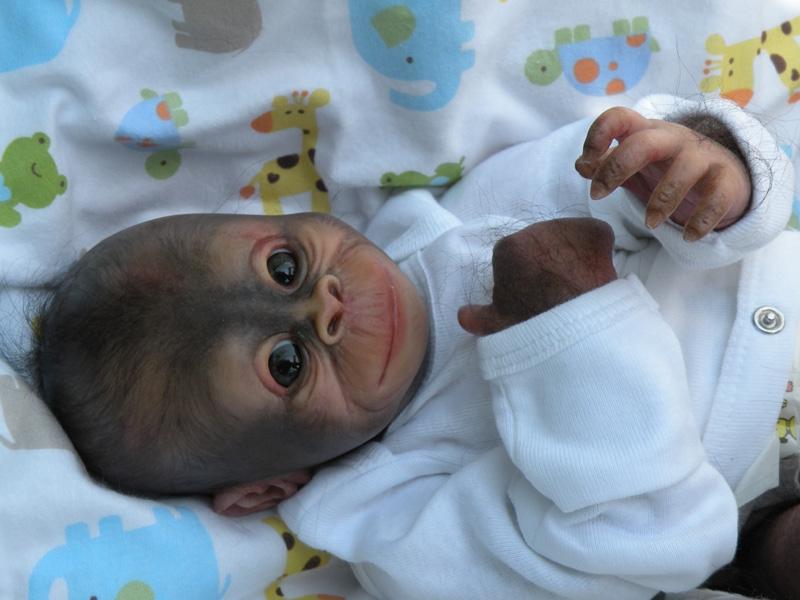 309100 dollkit 16 orangutan bindi 1 1 3 4 ledematen uitverkocht. Black Bedroom Furniture Sets. Home Design Ideas